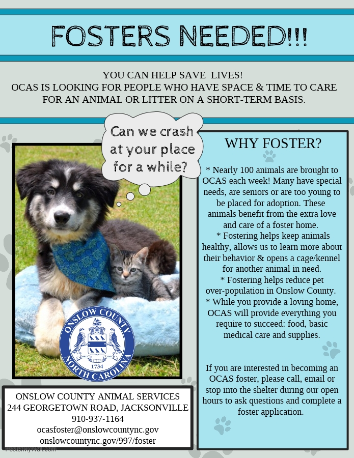 new foster flyer
